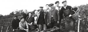 familie en medewerkers aan het plukken van de druiven voor champagne Francis orban
